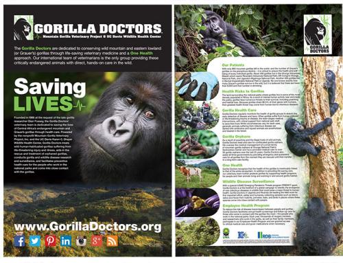 Display panels for Gorilla Doctors